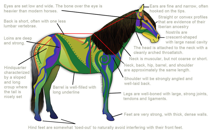 long backs and downhill vs. uphill questions - Page 2 - The Horse Forum